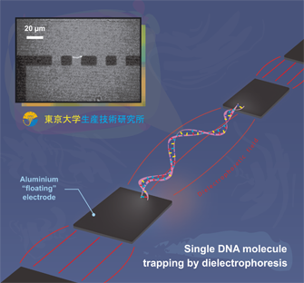 Single DNA trapping by DEP